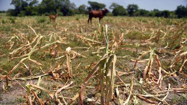 """Une assurance """"sécheresse"""" pour aider les agriculteurs"""