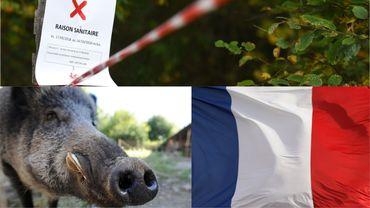 La propagation de la peste africaine est crainte par les éleveurs français