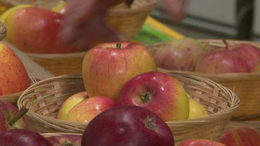 La fête de pomme au château de Wégimont