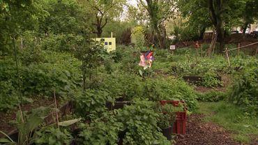 Les jardins partagés de la ferme Maximilien