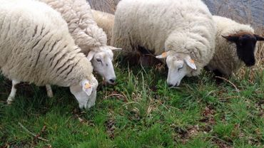 UE: le Parlement vote un texte interdisant le clonage animal à des fins alimentaire