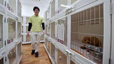 En 2013, 24 527 chiens (+727 par rapport à 2012) ont été recueillis dans 119 refuges du pays