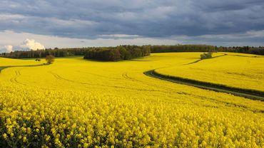 UE: l'Écosse annonce ne pas vouloir de culture OGM sur son territoire