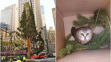 L'un des énormes sapins de Noël installé à New-York abritait une chouette