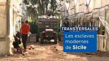 Au moins 5000 Roumaines travailleraient dans les serres de Sicile