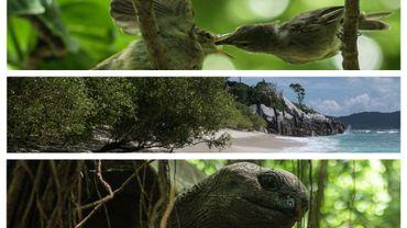 Un petit éden ou s'épanouissent rousserolles des Seychelles ou encore tortues géantes
