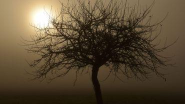 Le fait de modifier la structure du bois d'un arbre entraîne des changements dans la composition de l'ensemble des virus, bactéries, moisissures et autres micro-organismes qui y vivent