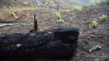 26.273 hectares de forêt détruits par des incendies au Guatemala