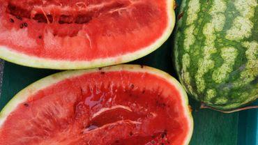 Anthisnes: la récolte des pastèques particulièrement fructueuse cet été