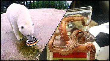 Nika l'ours polaire et Paul le poulpe