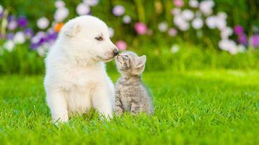 Les bons gestes du printemps pour vos animaux