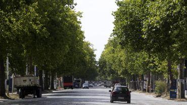 L'Avenue du port, avec ou sans platanes?