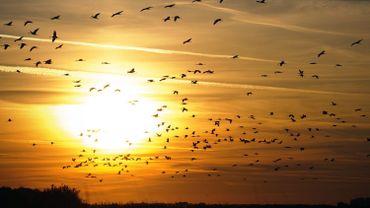 Environnement: l'Europe a perdu 421 millions d'oiseaux en 30 ans