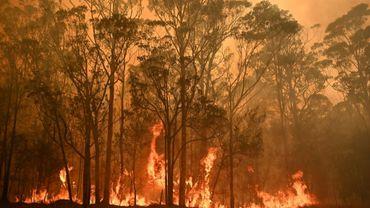 Un feu de forêt près de la ville de Moruya, en Nouvelle-Galles-du-Sud, le 4 janvier 2020 en Australie