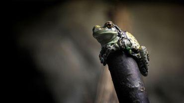 Le printemps tardif à l'origine d'un pic dans la migration annuelle des amphibiens