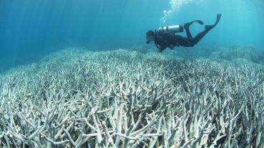 Le phénomène de blanchissement du corail est également observé sur la Grande barrière en Australie.