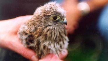 Les défenseurs des oiseaux appellent à tailler ou élaguer avant mars et les premiers nids