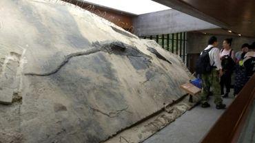 Un fossile de reptile découvert dans l'estomac... d'un plus grand fossile de reptile.