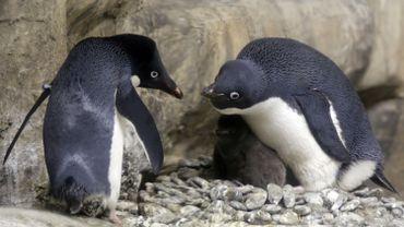 Cette dynamique contraste avec le déclin des populations de l'ouest de la péninsule Antarctique.