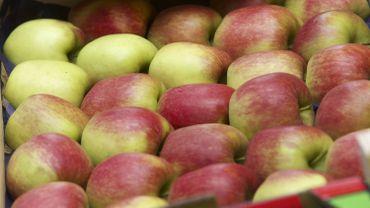 Embargo russe: poires, pommes et porc belges font grise mine