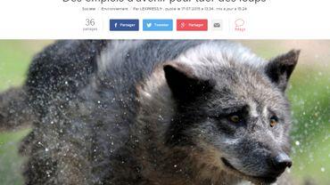 La délégation interrégionale Alpes-Méditerranée-Corse de l'Office national de la chasse et de la faune sauvage recrute des emplois d'avenir pour une mission particulière : tuer des loups