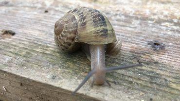 """La """"chasse"""" aux escargots se termine bientôt"""