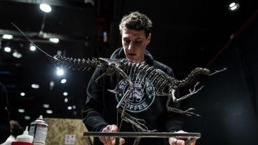 La squelette d'un Ornitholeste, l'un des plus agiles et féroces carnivores de la fin du Jurassique (environ -145 millions d'années avant Jésus-Christ), a été découvert dans l'État du Wyoming, aux États-Unis
