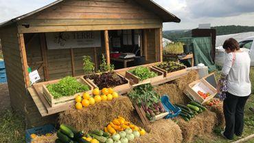 Des légumes variés et moins fréquents sont proposés par les Compagnons de la Terre