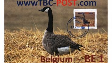 Pour survivre TBC a décidé il y a quelques années de concurrencer BPost sur son propre terrain, notamment les envois recommandés mais aussi le courrier traditionnels. Avec ses propres timbres.