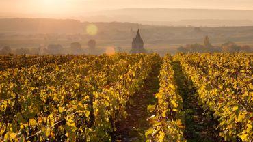 La vigne et le vin en France: quatre choses à savoir.