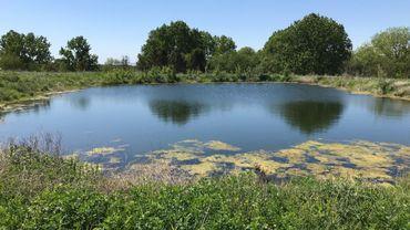 L'ancienne décharge de Grand-Leez (Gembloux) est réhabilitée en zone de biodiversité. Une réhabilitation dans le cadre d'un partenariat public-privé, mais entièrement financée par le privé