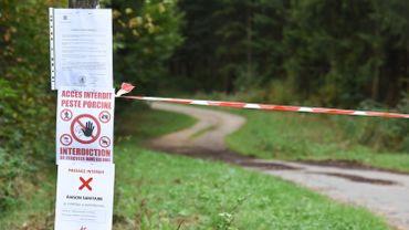 Peste porcine africaine: nouvelles mesures contre la peste porcine dans le nord de la France