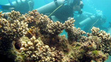 Le but est de créer des récifs artificiels pour les plongeurs