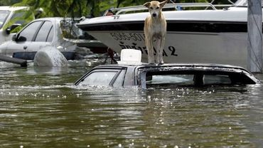 Un chien au-dessus des flots