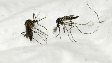 Les moustiques, vecteurs fréquents du paludisme