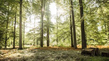 Le projet de privatisation d'une partie des forêts wallonnes est reporté