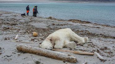 Un ours polaire abattu après avoir attaqué un homme sur l'île de Spitzberg en Norvège gît mort, le 28 juillet 2018