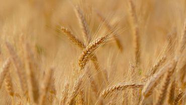 Le prix des terres agricoles flambe en Belgique: plus 26% en cinq ans