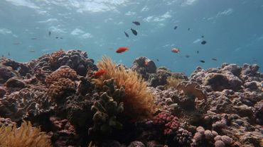 Scientists warned climate change is irreversibly changing the Great Barrier Reef's ecosystem