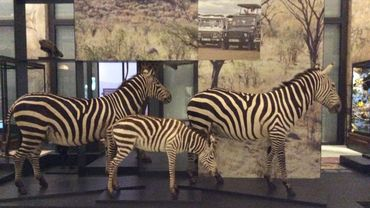 L'AfricaMuseum a ouvert ses portes le 8 décembre