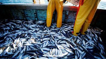 Coronavirus : la vente de poissons est en forte baisse dans notre pays