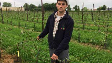 Michel Stassen, producteur de fruits à Hannut, est scandalisé.  Presque tous ses jeunes pommiers ont été sectionnés à l'aide d'un sécateur.