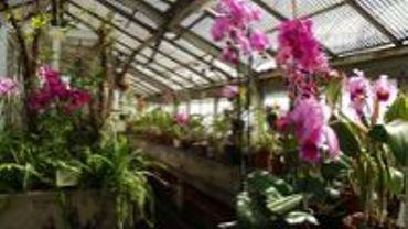 jardin botanique de liège