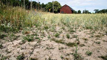 La moitié de la planète suffoque: 41 degrés en Grèce, 35 en Suède, où c'est le mois le plus chaud depuis 260 ans