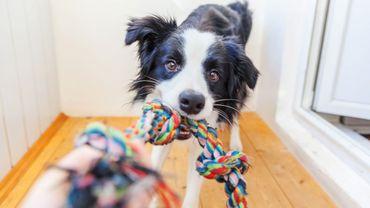 Quels sont les chiens qui aimeront le plus jouer avec vous ?