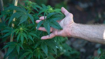 Un Sud-Africain atteint de sclérose en plaques, qui produit du cannabis à Johannesbourg, le 18 juillet 2017