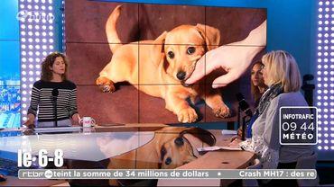 Comment éviter les morsures de chien ?