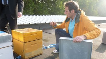 Installation des ruches sur le toit de Belle-Ile
