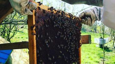 Le retour du froid a-t-il perturbé nos abeilles ? petit tour en Wallonie et à Bruxelles