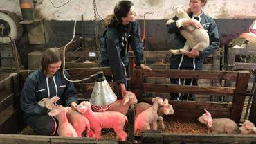 Agnelages pédagogiques pour les futurs vétérinaires